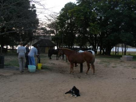 Paardrijden in de bush
