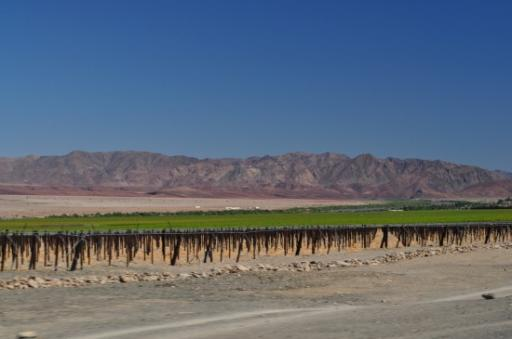 Vinyards along the Orange River as we drive