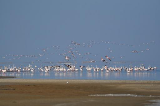 Walvis Bay Bird Life