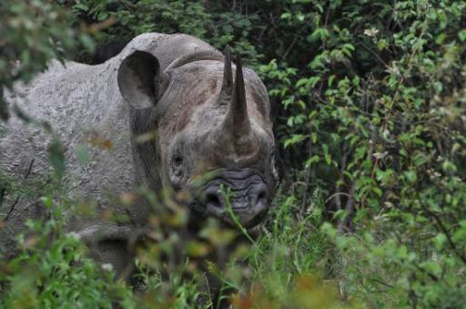 Black Rhino-550