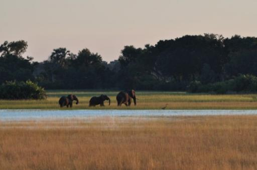 Elephants after sunrise - from the lodge-550