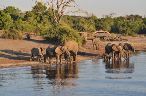 Elephant breeding herd at the water