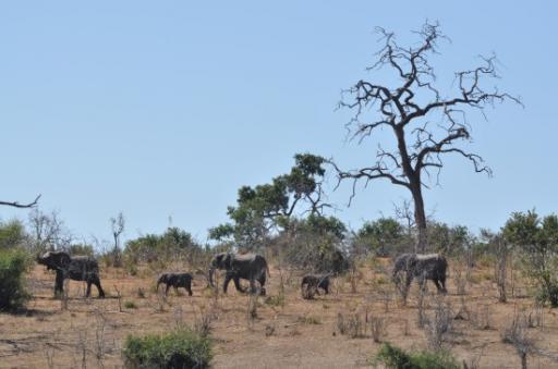 Chobe full of dead trees and eles
