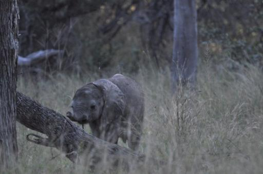 Cute - learning to use his trunk