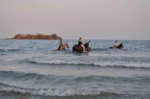 7  End of the horse ride - bush then beach then the swim at  Kande beach
