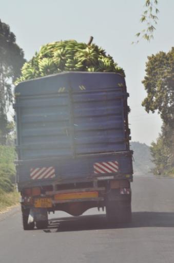 Many banana lorries