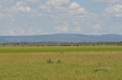 3 East side of the Serengeti - greener  279-550