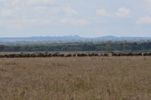 4 Serengeti - east side towards Seronera which is more in the centre 289-550