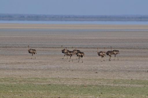 Lake Manyara to Arusha 192-550