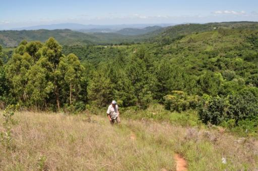 Walks on Bvumba hillsides 138-550