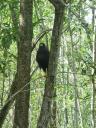 Enorme vogel