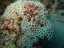 Underwater daisies?
