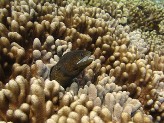 Eel at Niihau