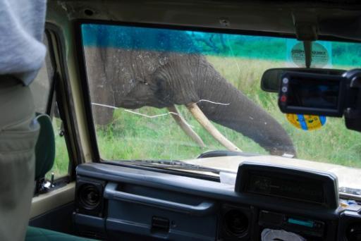 Elephant get a little too close