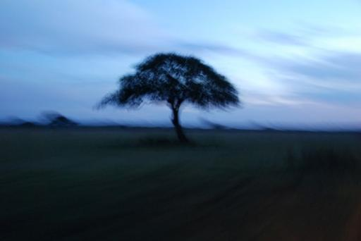 Image from morning game drive