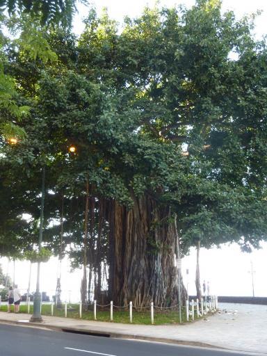 4. Honolulu - A Multi Rooted Tree