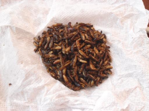 fliegende ameisen white ants back on the road again. Black Bedroom Furniture Sets. Home Design Ideas