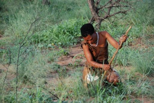 Bushmen Digging up Plants