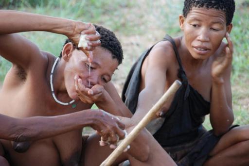 Bushmen Drinking from Plant