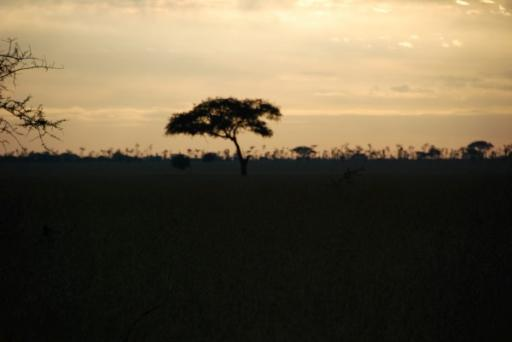 Sunrise over Serengeti