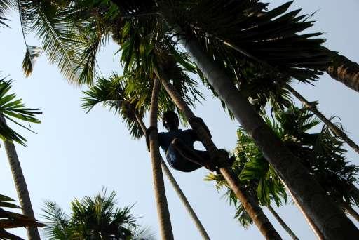 Coconut Retrieval Demonstration