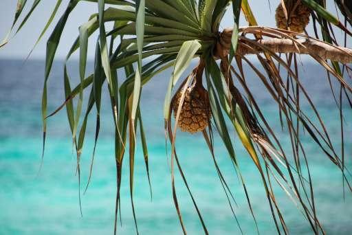 Paradise - Raya