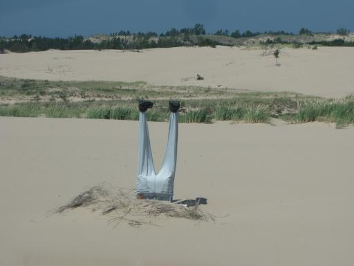 This Guy Was Dumb To Do A Headstand In The Sand!