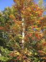 Love The Fall