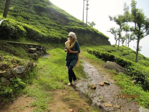 An early morning walk on the tea estate