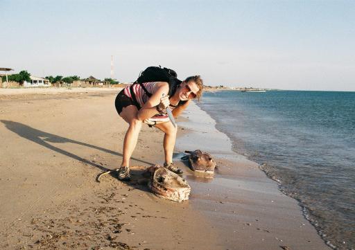 Sea Creature Found