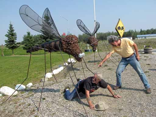 Mosquitoes Are BIG In Alaska Vagabond Elfrings