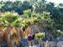 Lanny & Nica At San Andreas Spring Oasis