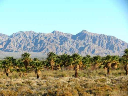 An Oasis From A Distance, Near Salton Sea