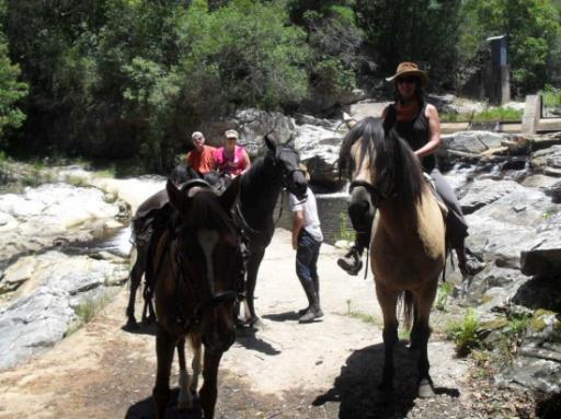 horsin' around