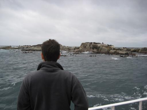 Peter checking out the seals
