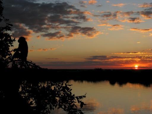A monkey sunset