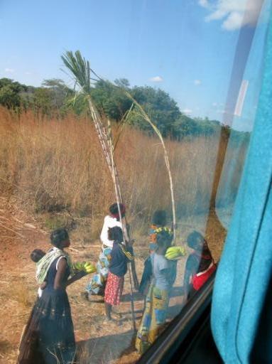 Bus snack - a 4metre sugar cane perhaps?