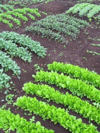 Organic Gibbs Farm