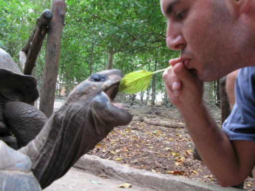 Face to face with a tortoise