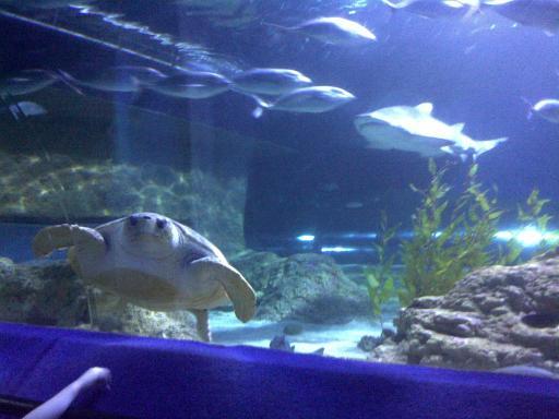Wa Aquarium Really Cool Encounters Miles Away