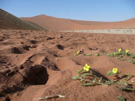 Recent rains bring new life to the Namib Desert