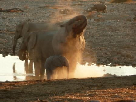 Bathtime at the waterhole, Etosha