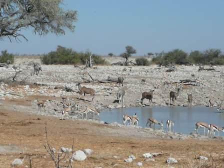 Sharing the water in Etosha