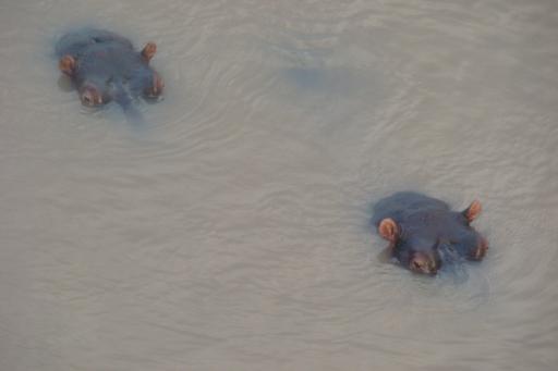 Nijlpaarden, onze dagelijkse bezoekers