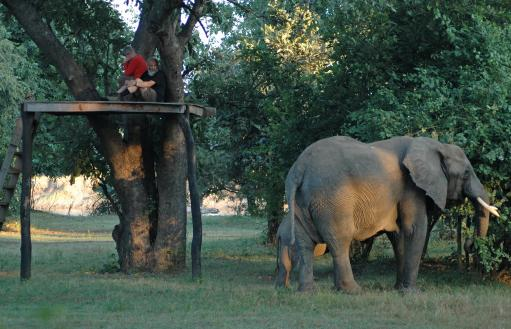 Olifanten op campingbezoek!