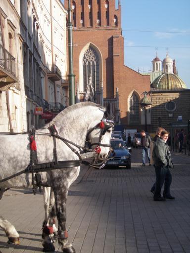 horsies in krakow