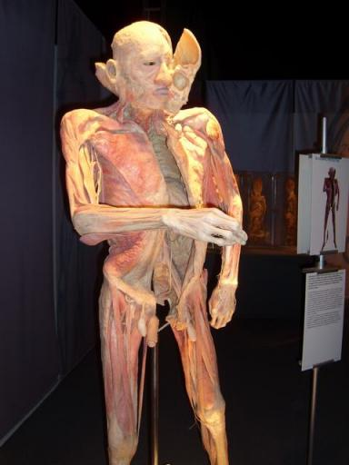 bodies udstilling vejle