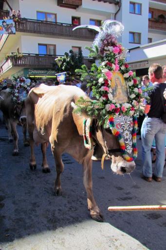 cow3 Almabtrieb, Mayrhofen