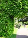 Botanic Gardens 02