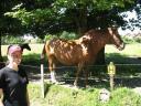 Jumbles 03 horseys